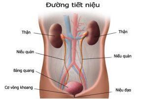 Bệnh viêm đường tiết niệu ở nam giới và những điều cần biết thumbnail